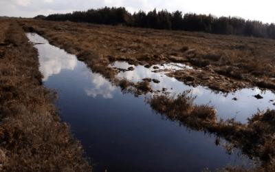 Restoring Degraded Bogs in Ireland and Across Europe