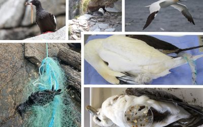 Ethical Taxidermy too highlight the Plight of Seabirds