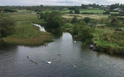 Terryland River