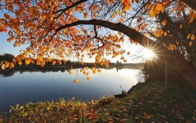 Chaosheng Zhang – Autumn Leaves