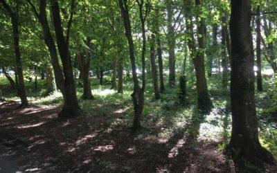 Biodiversity Walking Trail, NUI Galway