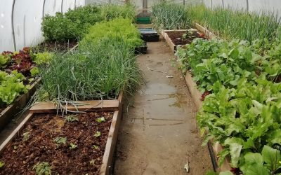 Ballinfoile Mór Community Organic Garden